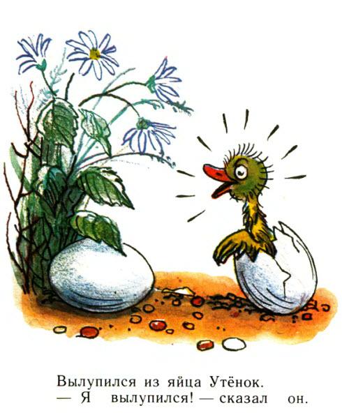 Для маленьких. Цыплёнок и Утёнок. В.Сутеев.
