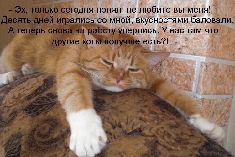 Кот устал картинки с надписями прикольные